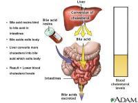 Gan nhiễm mỡ và cholesterol trong máu cao